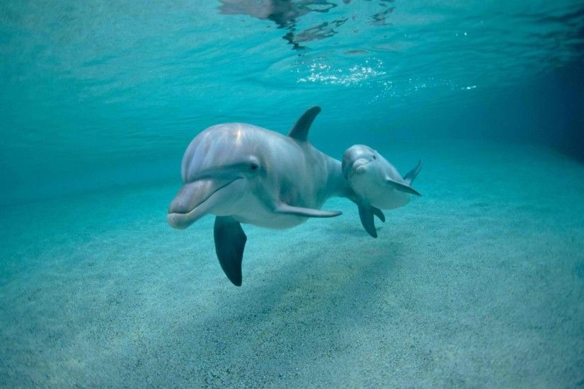 Dolphin Wallpapers High Definition