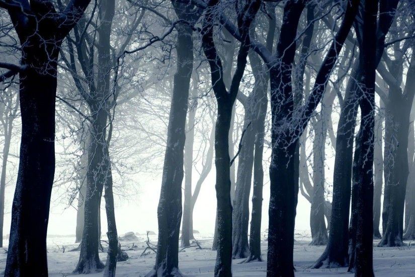 1920x1080 Dark forest in winter wallpaper - Photography wallpapers - #16423