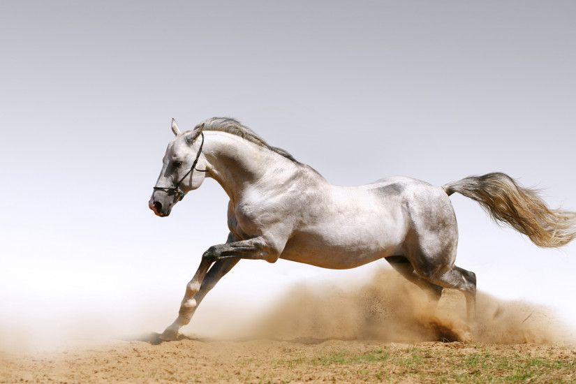 wild horses | black horse wallpapers black white horse wallpapers .