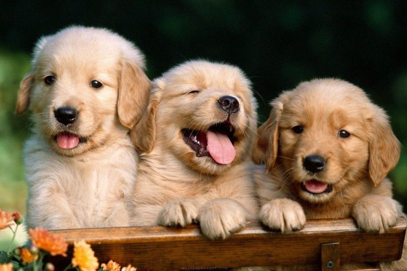 Free Wallpapers Of Kittens And Puppies The Cutest Puppies | HD Wallpapers |  Pinterest | Hd wallpaper and Wallpaper