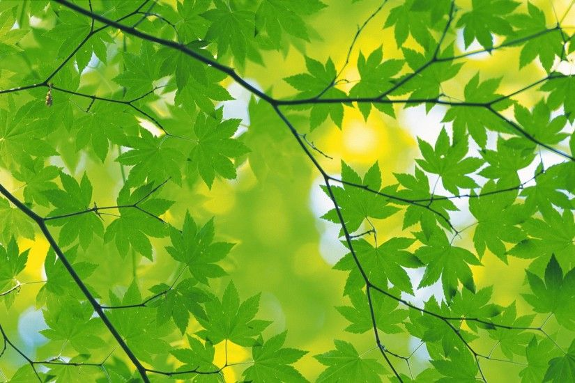 Green Leaves | HD Wallpapers