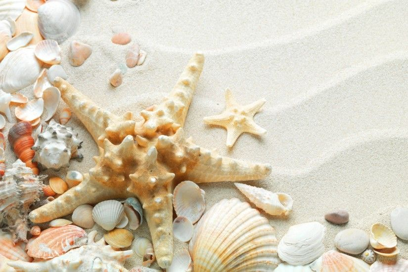 SAND SEASHELLS STARFISH WHITE WALLPAPER - (#16586) - HQ - Widescreen - HD