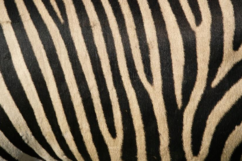 Zebra patterns - black and white stripes!