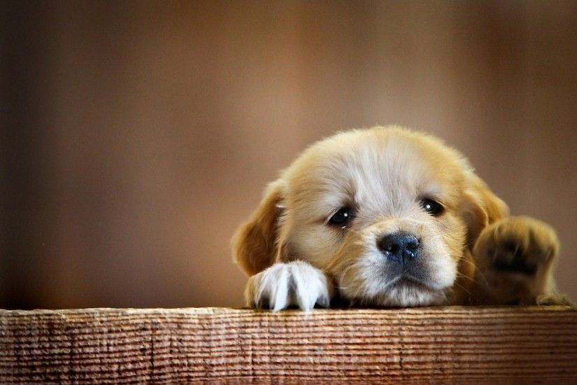 ... download 2560x1700 puppy adorable dogs wallpapers for chromebook ...
