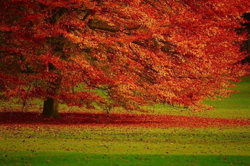 Beauty Autumn Wallpaper Free
