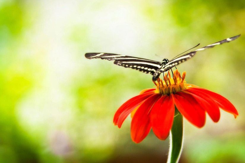 hd pics photos cute black butterfly macro flower nature hd quality desktop  background wallpaper
