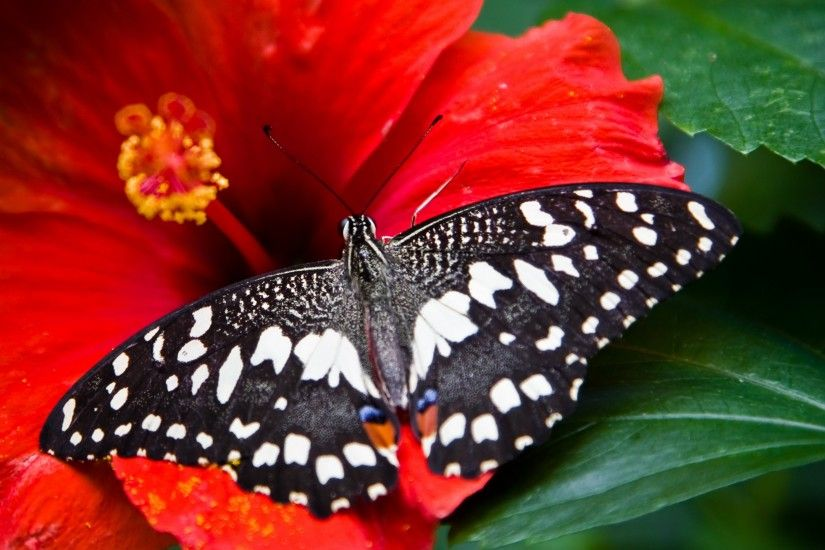 Tags: Butterfly, Bright red ...
