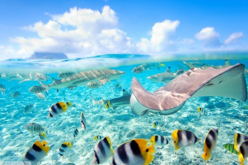 sea fish underwater coral reef swimming Caribbean Bora Bora Stingray split  view biology ocean wave reef