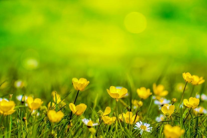 Natural Backgrounds With Moss Natural Backgrounds With Flowers ...