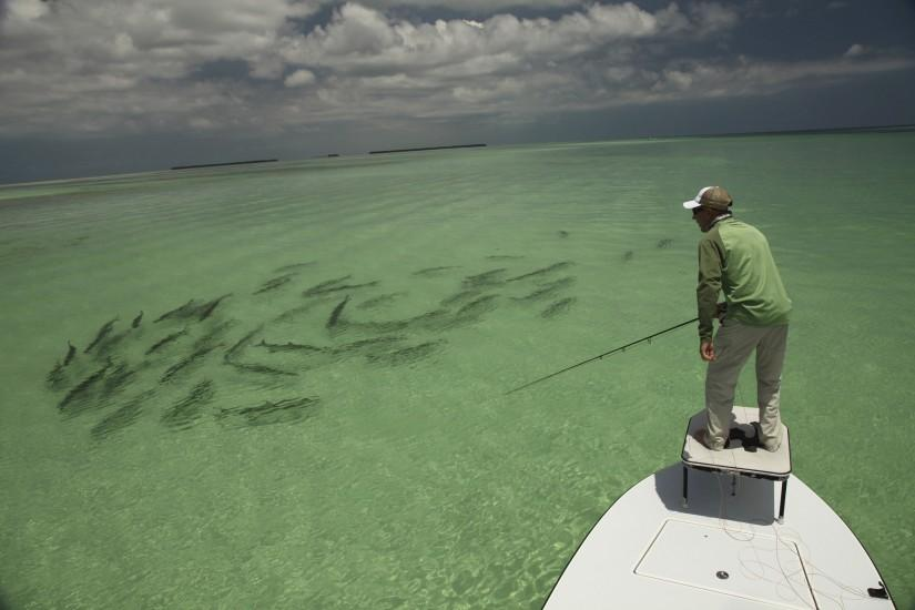 Back > Pix For > Saltwater Fly Fishing Art