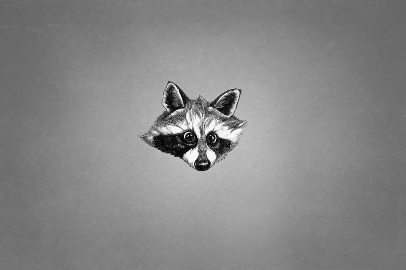 animals face raccoon black and white minimalism raccoon