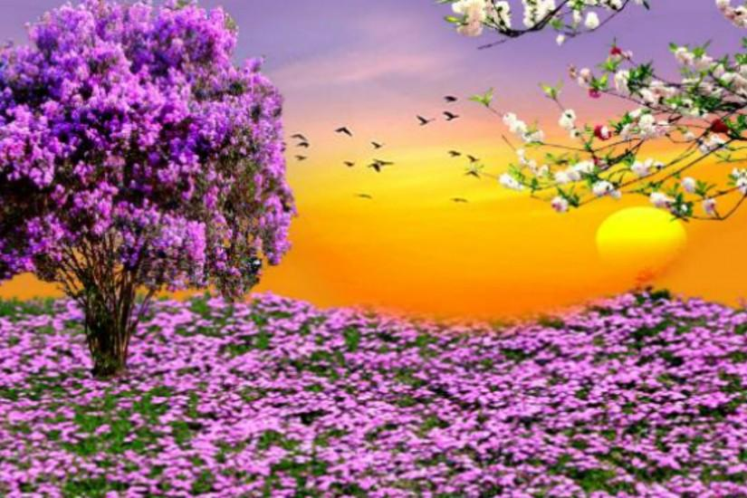 Nature Spring Purple Flowers Garden Sunset HD Wallpapers For Desktop