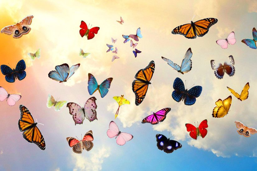 Preview wallpaper butterfly, sky, collage, photoshop 1920x1080