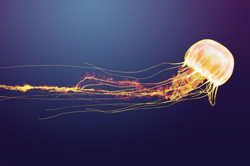 Animal Artistic Jellyfish · HD Wallpaper | Background ID:464911