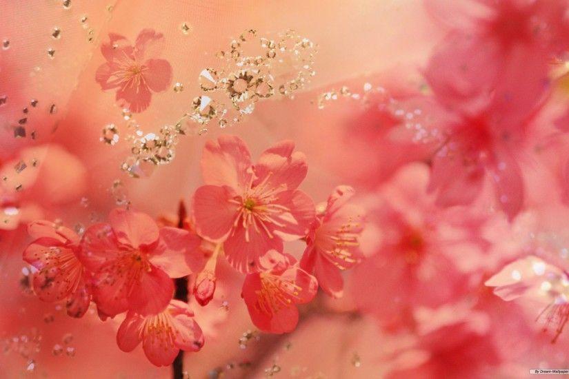 Free Flower wallpaper - http://www.0wallpapers.com/517- · Spring  BackgroundsFlower ...