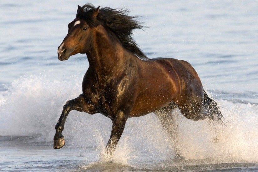 Wallpapers For > 3d Black Horse Wallpaper