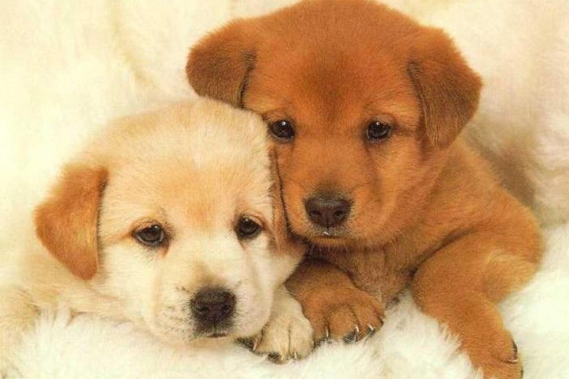 1920x1080 Image result for cute dogs wallpaper Dogs Pinterest | HD  Wallpapers | Pinterest | Dog