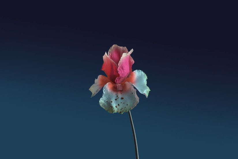 ... anyone a wallpaper of the cover for skin the remixes flume ...