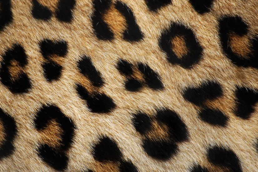 ... Animal Background Texture (15) by llexandro