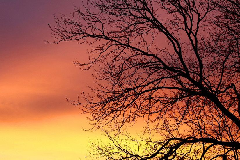 Branch Tree Sky Nature Orange Sunrise Dawn Yellow Daybreak HD.