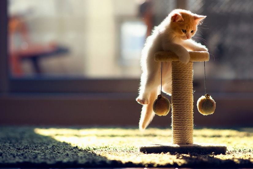 Funny Cat Playing 34 Cool Wallpaper