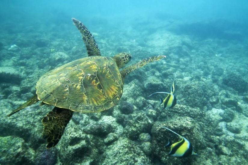Sea Turtle Wallpaper 698907