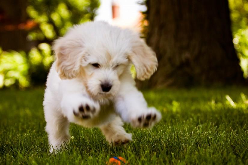 dog wallpaper running ball is high definition wallpaper you can