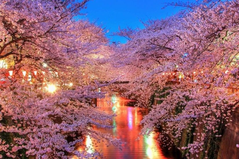 Free Cherry Blossoms City Lights Wallpapers, Free Cherry Blossoms .