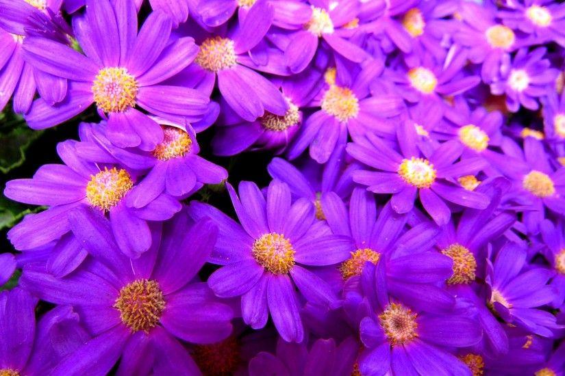Color Beautiful Flowers Bright Purple Pretty Flower Wallpaper
