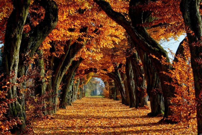 New Fall Autumn Trees Leaves Nature Wallpaper, HQ Backgrounds | HD .