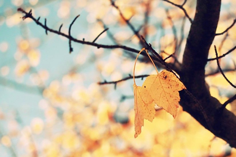Fall Backgrounds For Mac