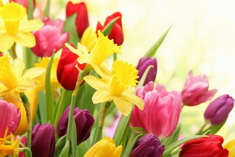 10. spring-flowers-wallpaper10-1-600x338