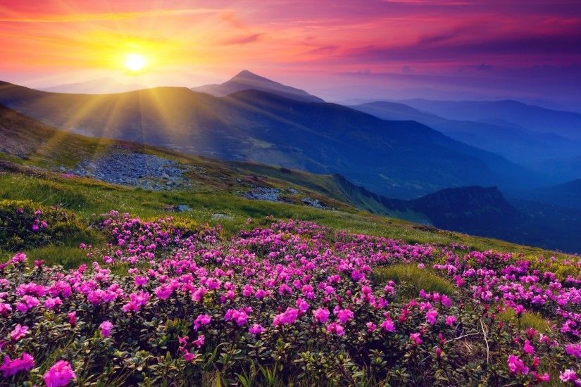 Awesome Wild Flowers About Wild Flowers Wallpaper