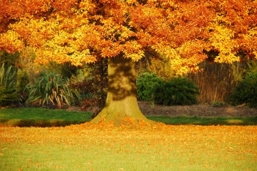 Fall, Amazing, Display Leaves, Fresh,high Definition,trees, Autumn,  Background Images, Mother Nature,