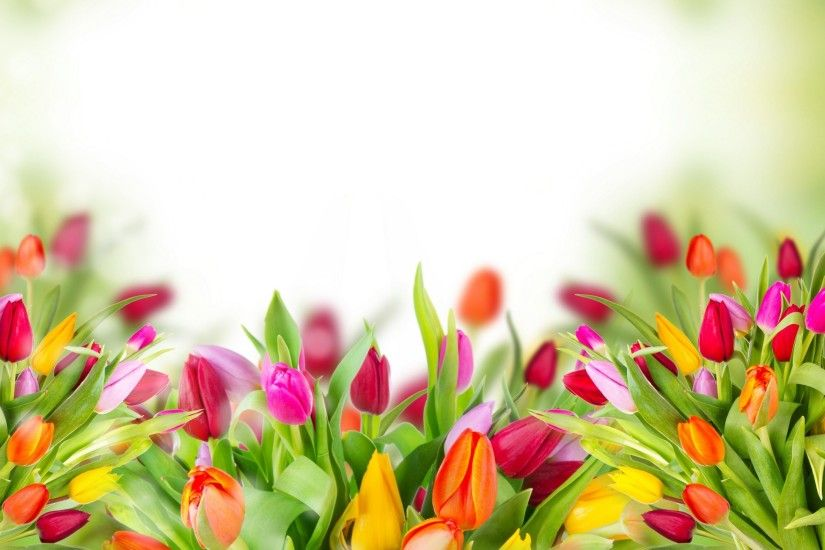 "Search Results for ""tulips flower wallpaper"" – Adorable Wallpapers"