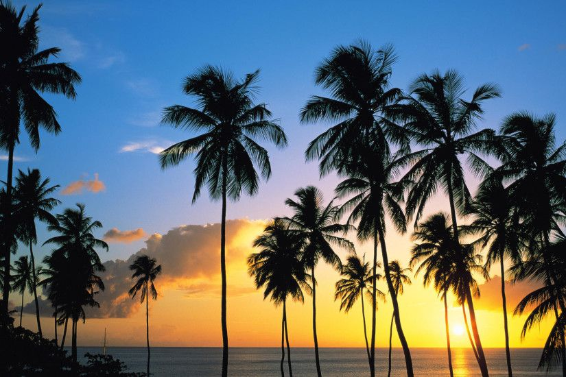 1920x1080 18 HD Palm Tree Desktop Wallpapers For Free Download