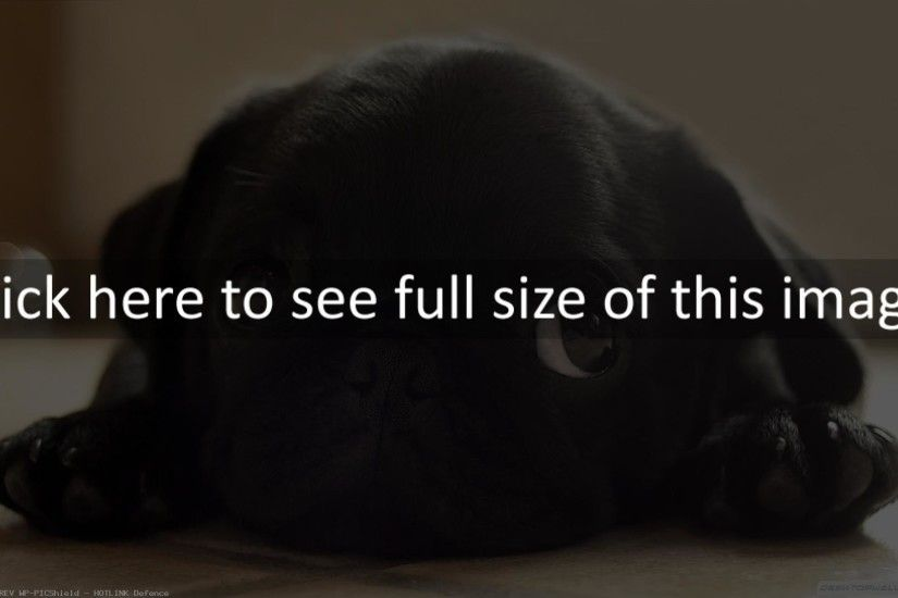 black pug puppies wallpaper - photo #26. dogs - Page 13 1920x1080