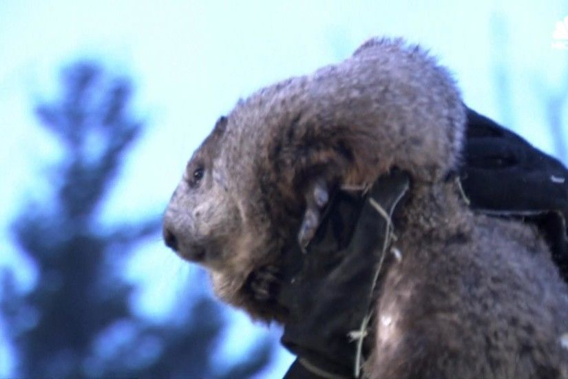 Groundhog Day: Punxsutawney Phil Sees Shadow, Predicts Six More Weeks of  Winter - NBC News