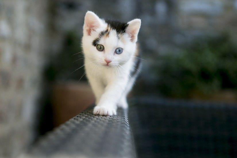 ... 50 Free HD Cat Wallpapers