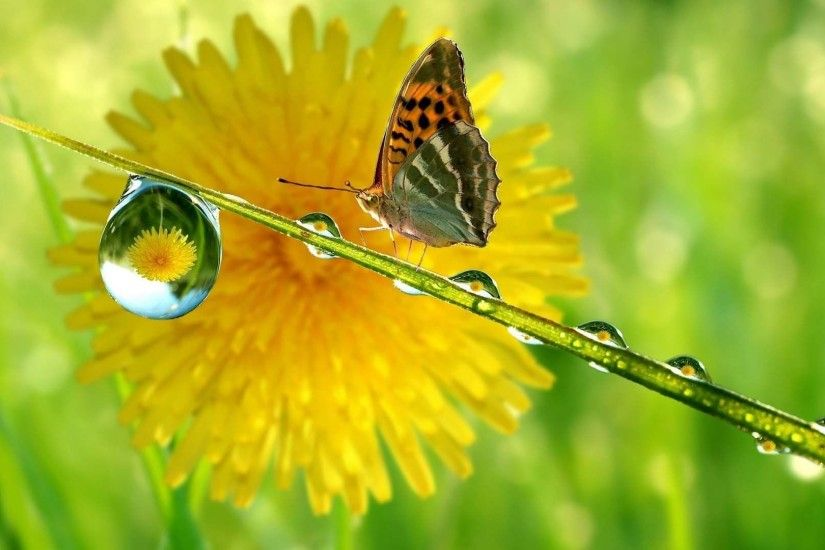 Beautiful Butterfly In Nature | HD Animals and Birds Wallpaper Free  Download ...