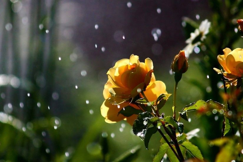 Nature flowers in the rain wallpaper