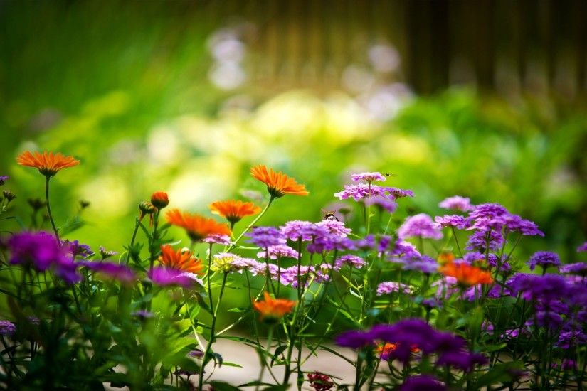Free Summer Flowers Wallpaper High Quality Â« Long Wallpapers ...