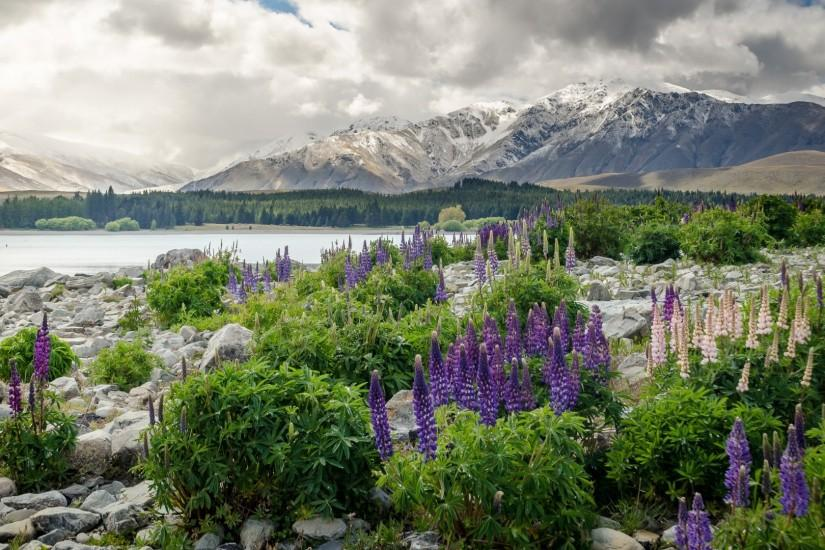 1920x1080 Wallpaper new zealand, mountains, flowers, lake