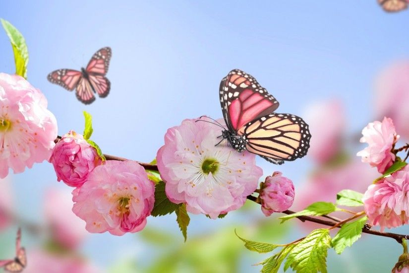 Butterflies on Flowers Spring Blossom Wallpaper