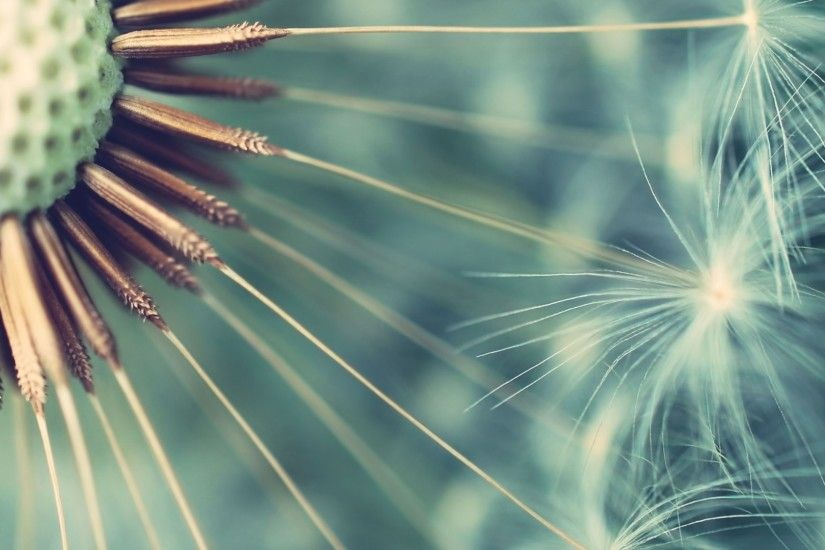 Beautiful Dandelion Wallpaper