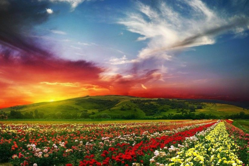 flower garden background wallpaper 3 flower garden background wallpaper 4  ...