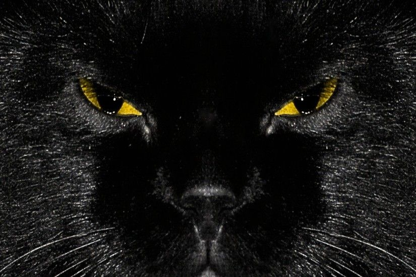 Black Cat HD Wallpaper Wallpapers Black Cat High Definition Wallpapers with  resolution 1920x1440