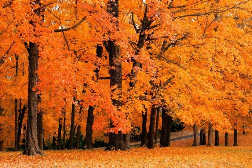 Wallpaper backgrounds · autumn leaves falling background