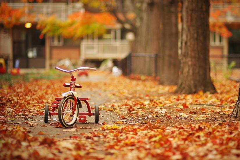 download fall wallpaper 1920x1080 screen