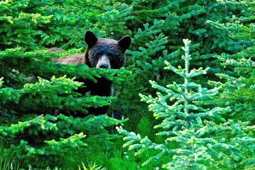 Brown Bear In A Green Forest picture